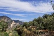 地中海油橄榄造福中国西北贫困农民