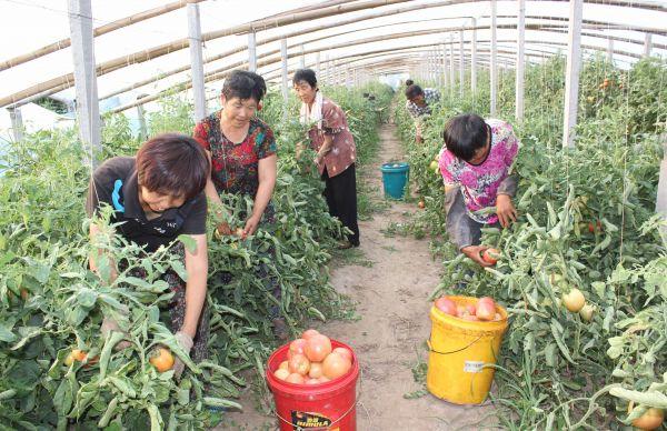 南冯村村民正在该村产业园内劳作