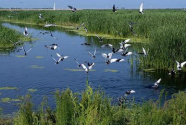 溪水泛白沫巡河记录却正常 媒体批河长工作流于形式