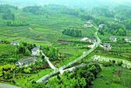 贵州湄潭:要用钱,山上种茶园