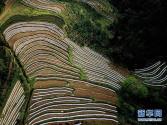 广西那坡县建成10万亩扶贫桑园