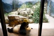 美国国家动物园大熊猫馆里的派对