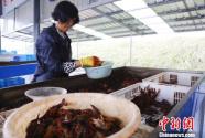 """探访安徽宣城洪林镇:打造长三角人家的""""后厨房"""""""