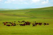 """""""美丽中国-内蒙古旅游文化周""""在坦桑尼亚开幕"""