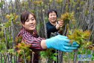 """中条山下绿意浓——一个""""资源穷县""""的生态发展之路"""