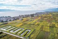 云南省大理市古生村:看得见的美丽 留得住的乡愁
