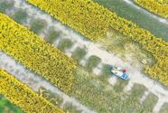 今年糧食總產將繼續保持1.3萬億斤以上