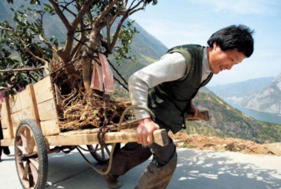【特稿】三峡移民印记:板车上的3000公里与5万棵树60.png