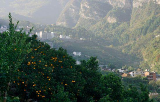 【特稿】三峡移民印记:板车上的3000公里与5万棵树1587.png