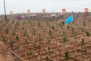 我们播种绿色——来自全国各地春季植树造林的报告