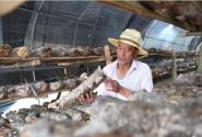 山西沁源:菌类种起来 农民富起来