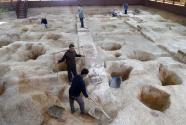 解密上山文化:一萬年前誰種稻