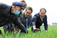全國10省份小麥條銹病發生面積1200萬畝 農業農村部部署防控