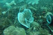 15億口罩流入海洋,危害正蔓延
