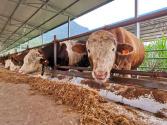 """從一群黃牛的飼料,看五糧液如何爭創""""零碳酒企"""""""